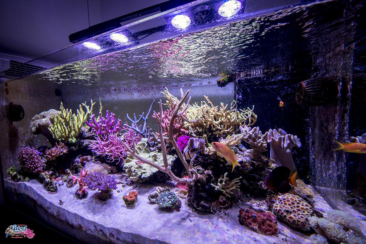 La vasca di andrea grignani aka for Filtro vasca pesci