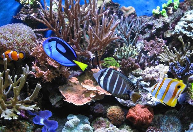Quanti pesci in quale vasca wdy fishcalc v1 0 algranati for Vasca per pesci
