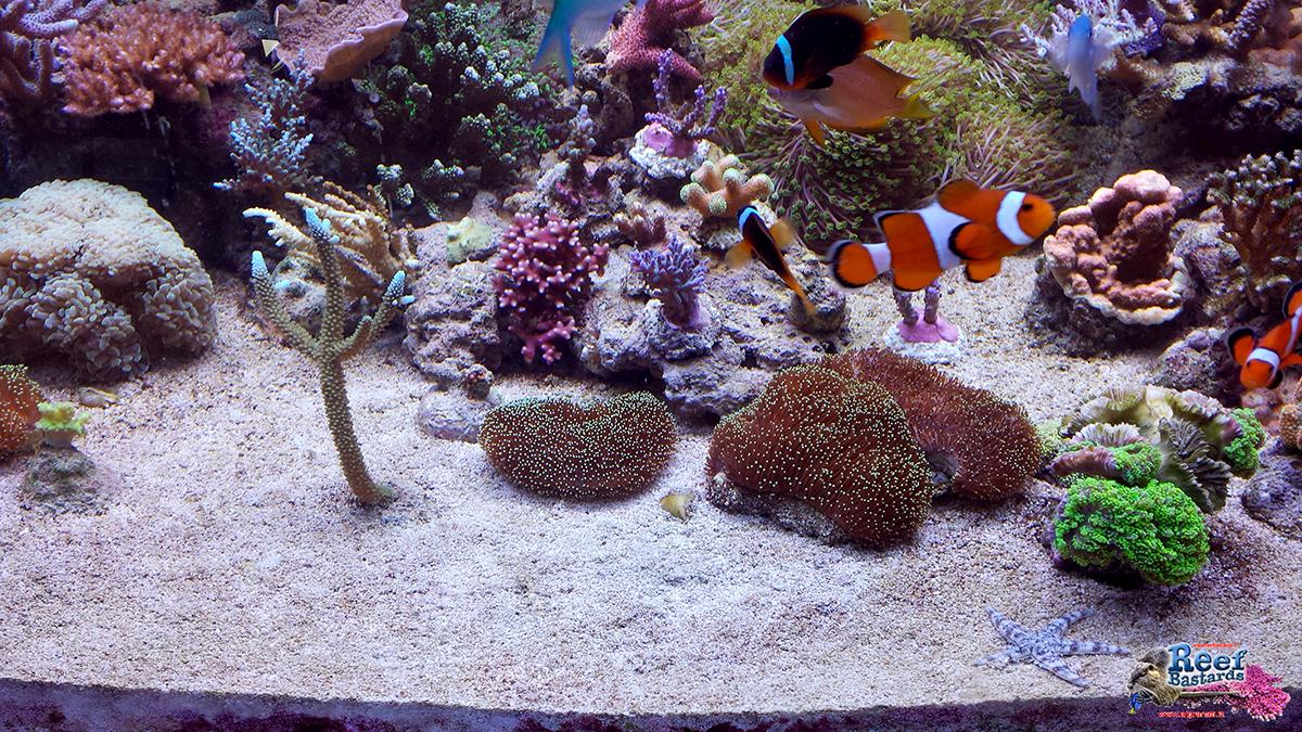 Sabbia viva per acquario marino casamia idea di immagine for Acquario marino in vendita