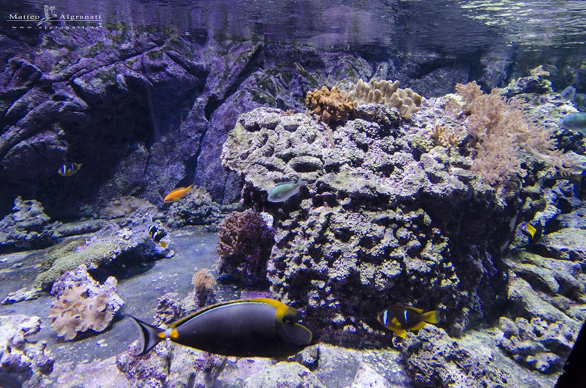 L acquario civico di milano algranati for Vasche per tartarughe marine
