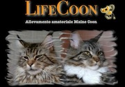 life coon